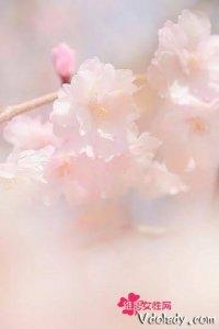 桃之妖妖,桃花特辑,三月纷飞的桃夭