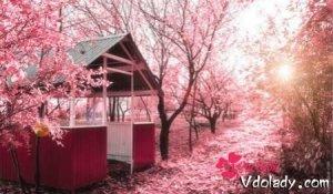 樱花很美,樱花做成的美食颜值要上天了
