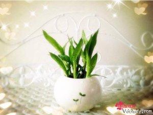在家养这几款植物,不仅净化空气又能带来好运财富,特别是第8款