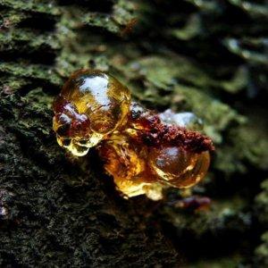 农村遍地都是,以前烂在树上没人要,现在却滋养皮肤满满胶原蛋白