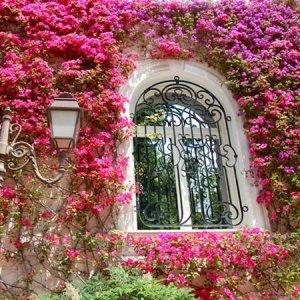 让花朵爬满整个墙,自己置身花海中,8款爬藤为你打造梦幻般浪漫