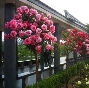 最适合现在养在阳台家里的花卉,明年春天来了开出一片花海