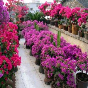 装扮大气庭院的魅力花卉,每一种都让你特别喜爱