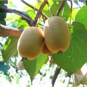 去朋友家做客,却被满阳台的水果盆栽呆住了,水果多到吃不完