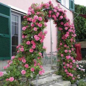 栽种一株爬藤于阳台,待春暖花开之日,定不会让你失望