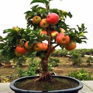 12种可以在阳台盆栽的水果,好养易活,新手种下去也能吃个饱