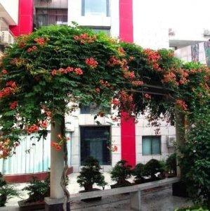 种上一棵爬藤植物,让阳台变成仙境,美翻了