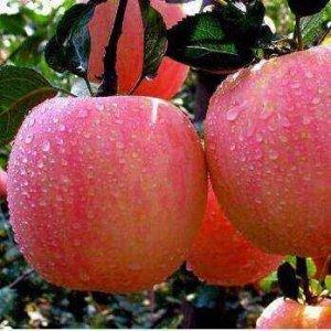水果那么贵不如在阳台自己种,这几款果树绿植易爆盆又好养超经济