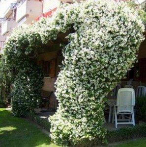 爬藤花现在种下去,明夏就能爬满屋!阳台瞬间变成小花园