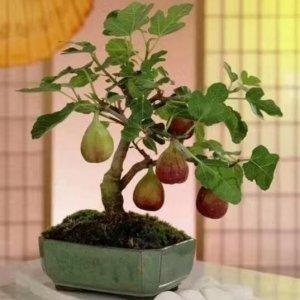 最适合南北方种植的庭院阳台水果盆栽,你喜欢哪一种?