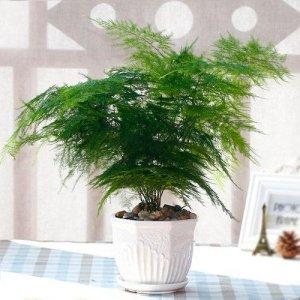 家里放上这9款植物,身体会越来越健康,几乎很少有人知道