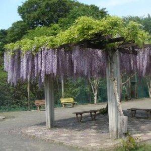不要在庭院乱养花啦,人家小别墅都种满了这样的爬藤植物,太美了
