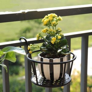 不用再往阳台安花架了,现在都用落地式花架,简约美观又不贵