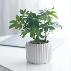 别再傻傻的在家到处养绿萝了,这7盆植物比它强百倍,不来一盆吗