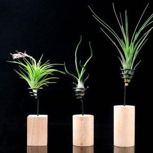 """现在的盆栽真神奇!第1款的""""无土植物""""还是一次见,涨见识了"""