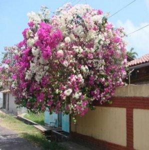 这几种爬藤植物,种上一种都能让你那单调的家瞬间唯美起来