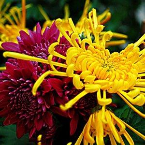 庭院美化,只需一株爬藤植物,一年四季美不胜收满园清香