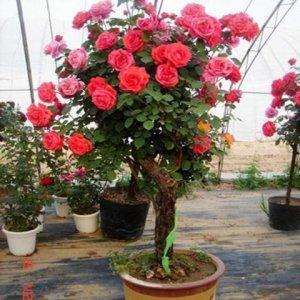 比香水还香的6种植物,种在自己家里,家中一年都能香气弥漫