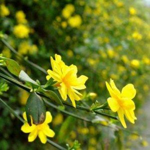 天台上种上爬藤植物,隔热降温,还能给你一帘幽梦的浪漫爬藤绿廊