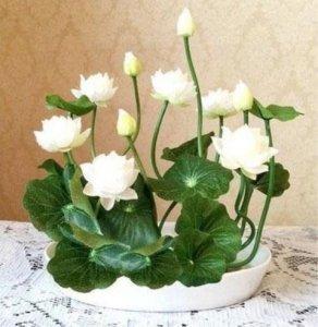 比香水还香的6种植物,种在自自己家里,一年都能香气弥四溢