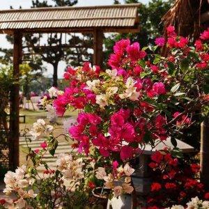 美丽易活,长势喜人,群花缭绕,攀爬植物让你的家变身仙境