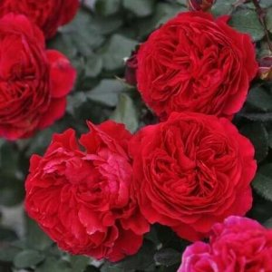 家里院子有空地的一定别浪费,种上这些植物,一年四季花满屋香
