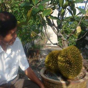 最适合阳台盆栽的10种水果,好养还吃不完,想吃就摘