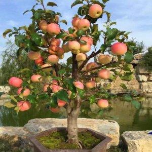 史上最全的阳台水果盆栽,新手轻松养爆盆,种上一棵当年就结果