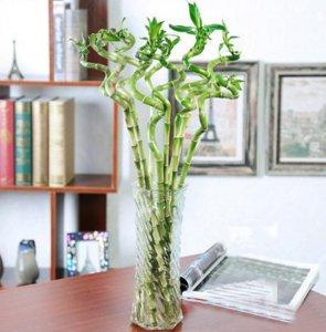 六款最适合秋天养的盆栽植物,放在家里可以吸甲醛,又可以防辐射