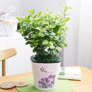 悄悄的告诉你,这几款植物种在家里,不仅好看易养,关键是能旺财
