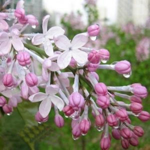 懒人最爱这8种庭院植物,越养越好看,尤其第八种