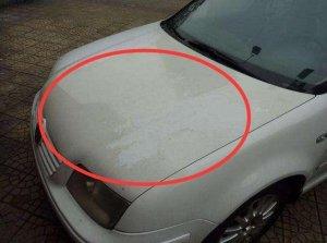 新车和灰白色车多久打一蜡?教你一招擦一擦,3年车身锃亮不沾灰