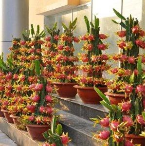 现在阳台都流行种阳台水果,这几款更是随便爆盆