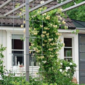 家里有庭院、阳台的,一定不能错过爬藤植物