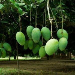 这几种水果在阳台盆栽就可以养爆盆,好养还吃不完,想吃任性摘