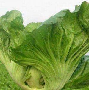 有机蔬菜太贵吃不起,阳台自己种一些,天天吃绿色蔬菜不要钱