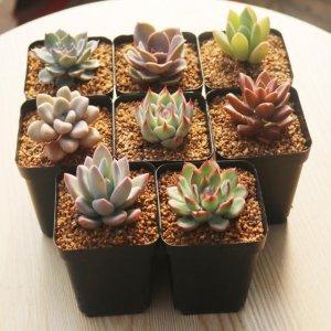 适合摆在家里阳台的7款漂亮盆栽,第4款可以拿来缓解蚊虫叮咬