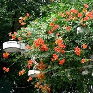 阳台种上这些爬藤植物秒变花园,隔热降温不招虫,不一样的浪漫