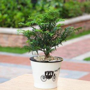 适合摆在家里阳台的8款漂亮盆栽,第34款可以拿来缓解蚊虫叮咬