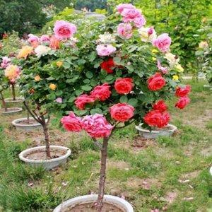 多一分绿色,添一分清新,把花卉摆放阳台上,让家里生机盎然
