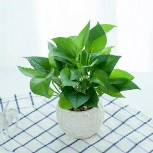 有钱人喜欢养的8款植物盆栽,除了耐养据说能给家里招财