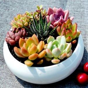 这几款多肉植物组合盆栽你见过吗?