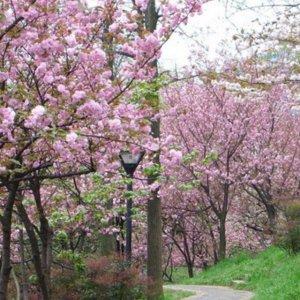 比香水还香的11款爬藤植物,种在院子芬芳馥郁,老婆最爱第3款