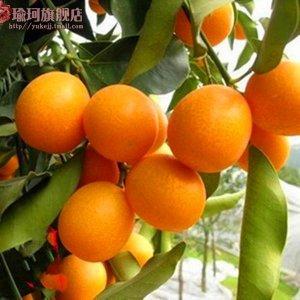 种满果树在家的院子阳台,花点心思就能看还能吃