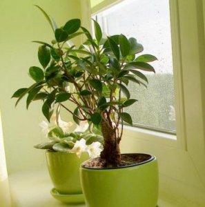 几乎没人知道,家里放上这些植物,镇宅发财家庭幸福