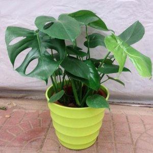 公认甲醛最怕的几种植物盆栽,无须打理轻松养活,养家里更上档次