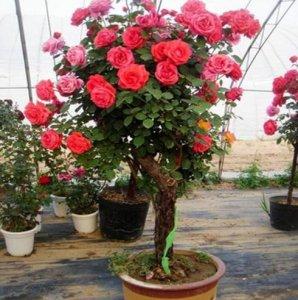 这十种爬藤现在种下去春天就能爬藤,阳台瞬间变成小花园