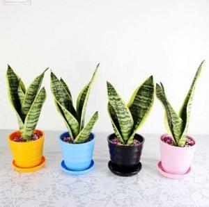 办公室没绿色植物怎会有生气?这8款个性小盆栽轻松还你舒适环境