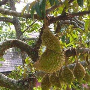 现在阳台都流行种阳台水果,下面这几款更是随便爆盆
