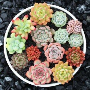 入门必养的植物,观赏价值颇高,价格亲民,适合新手